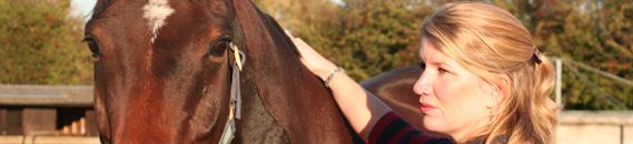 equine_animal_healing3